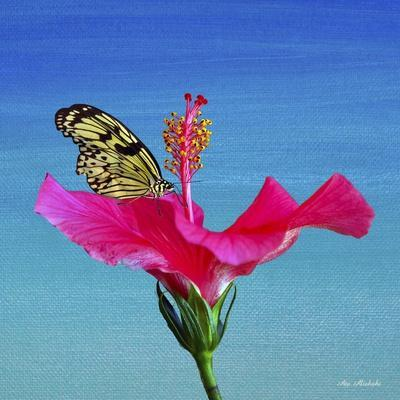 https://imgc.allpostersimages.com/img/posters/butterfly-and-flower-3x_u-L-Q1CQJ5T0.jpg?artPerspective=n