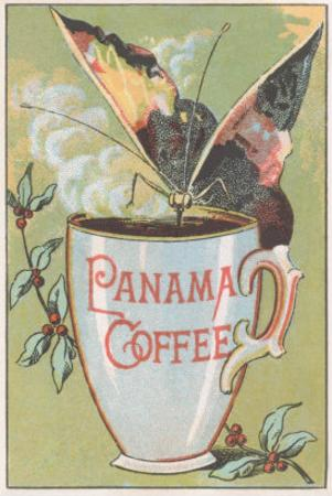 Butterfly Drinking Panama Coffee