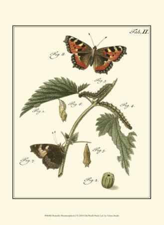 Butterfly Metamorphosis I