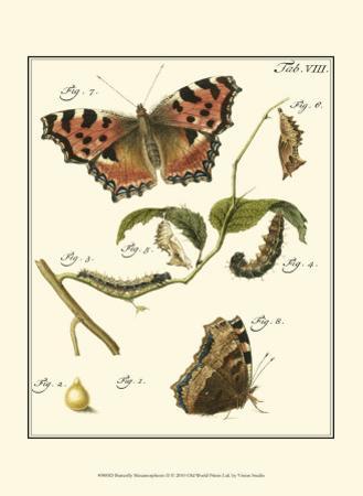 Butterfly Metamorphosis II