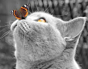 Butterfly on Nose