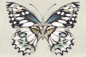 Butterfly's Kiss I by Isabelle Z