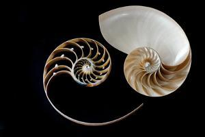 Nautilus Yin Yang by by ana_gr
