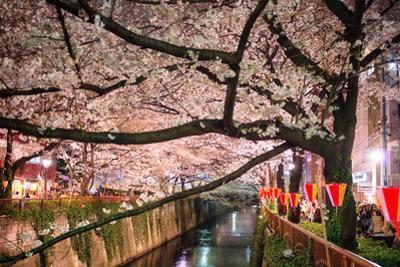 Sakura at Nakameguro by By CaDs