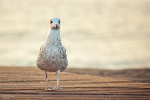 Seagull by by Juanedc