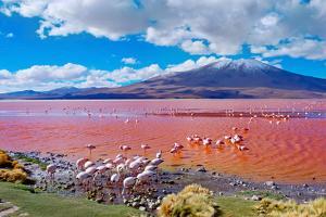 Flamingoes in Laguna Colorada , Uyuni, Bolivia by Byelikova Oksana