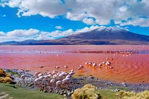 Flamingoes in Laguna Colorada , Uyuni, Bolivia by Byelikova Oksana