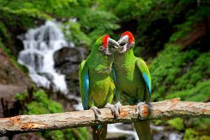 Parrot against Tropical Waterfall Background by byrdyak