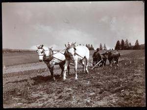 Ploughing on the Property of Alton Brooks Parker, Esopus Creek, New York, 1904 by Byron Company