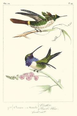 Lemaire Hummingbirds I by C.L. Lemaire
