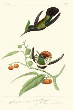 Lemaire Hummingbirds III by C.L. Lemaire