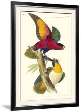 Lemaire Parrots I by C.L. Lemaire