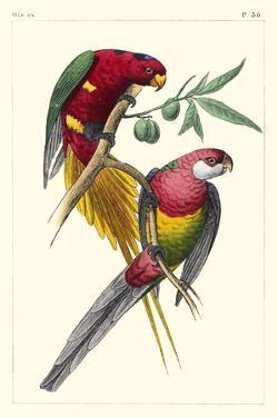 Lemaire Parrots III by C.L. Lemaire