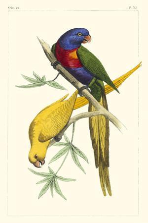 Lemaire Parrots IV by C.L. Lemaire