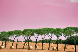 Tuscany Maremma Countryside by (c)paolodelpapa