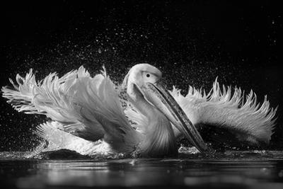 Refreshing by C.S. Tjandra