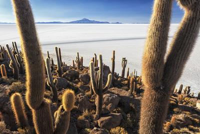 https://imgc.allpostersimages.com/img/posters/cacti-isla-incahuasi-a-unique-outcrop-in-the-middle-of-the-salar-de-uyuni-oruro-bolivia_u-L-PWFWT10.jpg?artPerspective=n