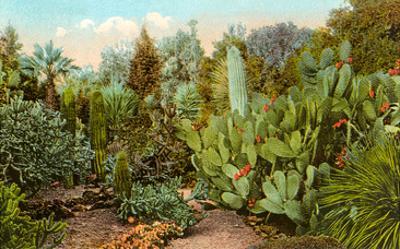 Cactus and Succulent Garden