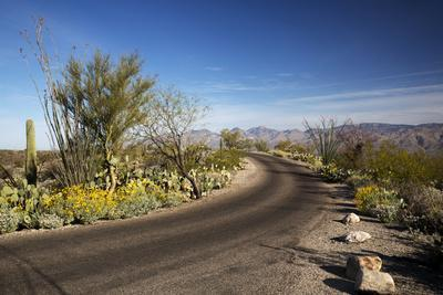 https://imgc.allpostersimages.com/img/posters/cactus-forest-drive-saguaro-national-park-arizona-usa_u-L-PN6N9N0.jpg?p=0