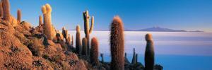 Cactus on a Hill, Salar De Uyuni, Potosi, Bolivia