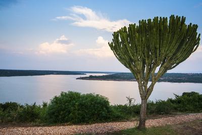 https://imgc.allpostersimages.com/img/posters/cactus-tree-above-the-kazinga-channel-linking-lake-george-and-lake-edward-at-sunset_u-L-PQ8RVN0.jpg?p=0