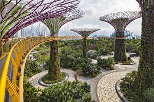 Supertree Grove and Skywalk in the Gardens by the Bay, Marina South, Singapore. by Cahir Davitt