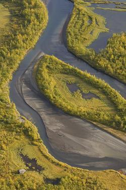 Aerial View of Birch Trees in the Laitaure Delta, Sarek Np, Laponia World Heritage Site, Sweden by Cairns