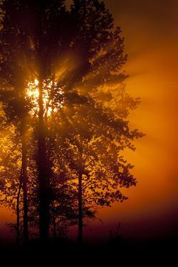 Sun Filtering Through Mist at Dawn Silhouetting Trees, Bergslagen, Sweden, June 2009 by Cairns