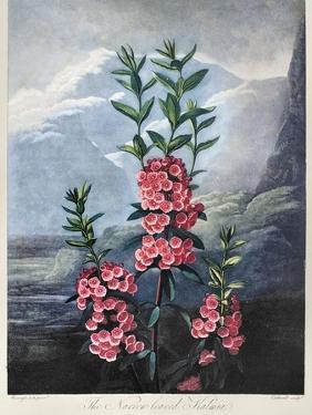 Thornton: Kalmia by Caldwall