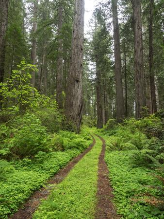 https://imgc.allpostersimages.com/img/posters/california-del-norte-coast-redwoods-state-park-damnation-creek-trail-and-redwood-trees_u-L-Q1D03M00.jpg?artPerspective=n