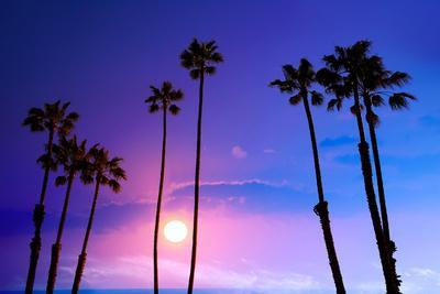 https://imgc.allpostersimages.com/img/posters/california-high-palm-trees-purple-sunset-sky-silhouette-background-usa_u-L-Q105MD40.jpg?p=0