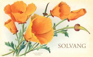 California Poppies, Solvang