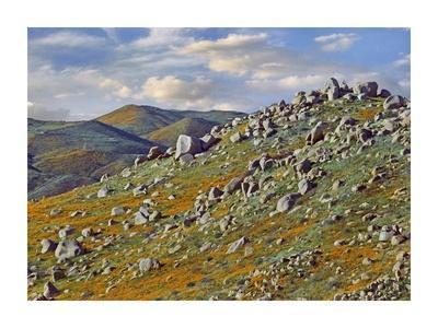 https://imgc.allpostersimages.com/img/posters/california-poppy-flowers-in-rocky-grassland-canyon-hills-santa-ana-mountains-california_u-L-F7IBHK0.jpg?p=0