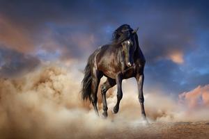 Black Stallion Horse by Callipso88