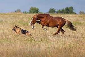Dog and Horse by Callipso88