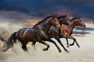 Group of Horse Run by Callipso88