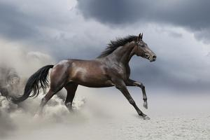 Horse Gallop in Desert by Callipso88