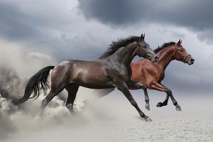 Horse Run Gallop by Callipso88