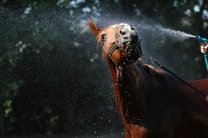 Horse Wash by Callipso88