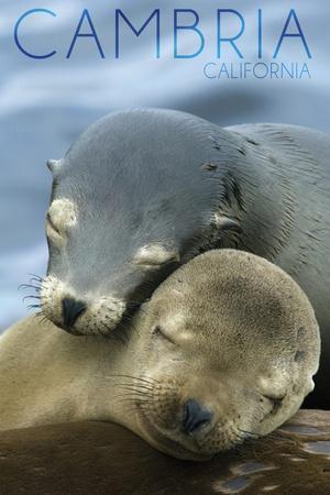 https://imgc.allpostersimages.com/img/posters/cambria-california-sea-lions-cuddle_u-L-Q1GQMLZ0.jpg?p=0