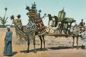Camel-Borne Wedding Litter