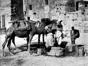 Camels Drinking from Davids Well Bethlehem Israel