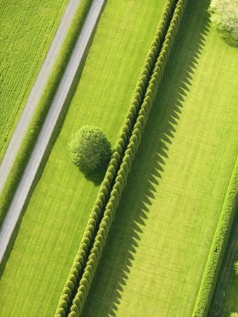 Hedge in The Hamptons by Cameron Davidson