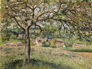 Apple Tree in Eragny, 1884 by Camille Pissarro