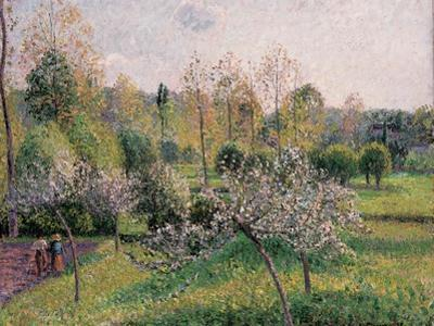 Apple Trees in Blossom, Eragny, 1895 by Camille Pissarro