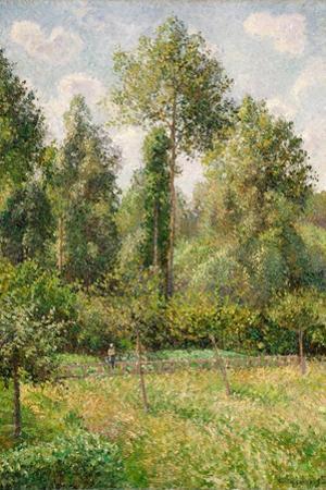 Poplars, Eragny by Camille Pissarro
