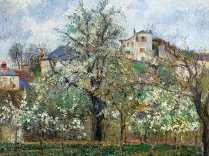 Vegetable Garden and Trees in Blossom, Spring, Pontoise by Camille Pissarro