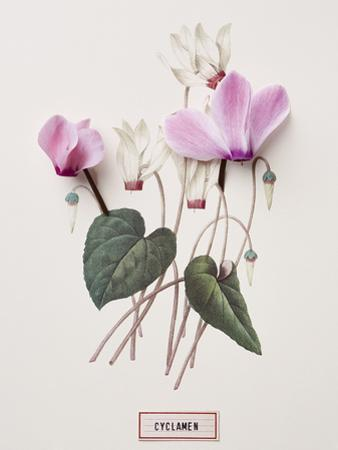 Floral Decoupage - Cyclamen by Camille Soulayrol