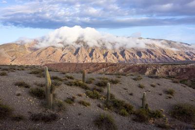 https://imgc.allpostersimages.com/img/posters/candelabra-cactus-valle-tin-tin-los-cardones-park-argentina_u-L-PWFEPJ0.jpg?p=0