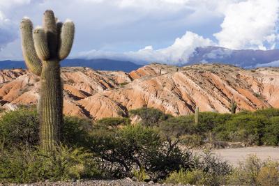 https://imgc.allpostersimages.com/img/posters/candelabra-cactus-valle-tin-tin-los-cardones-park-argentina_u-L-PWFHFH0.jpg?p=0